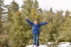 """Hugging Tree"", as I grew up calling tree stumps"